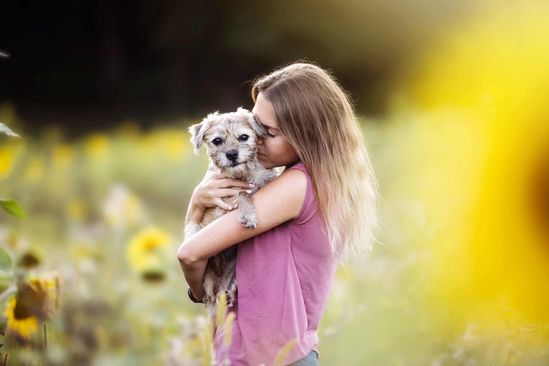 border terrier wien