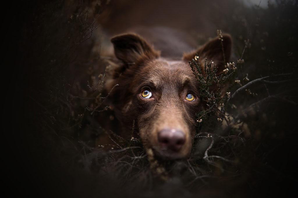 hundefotografiewien